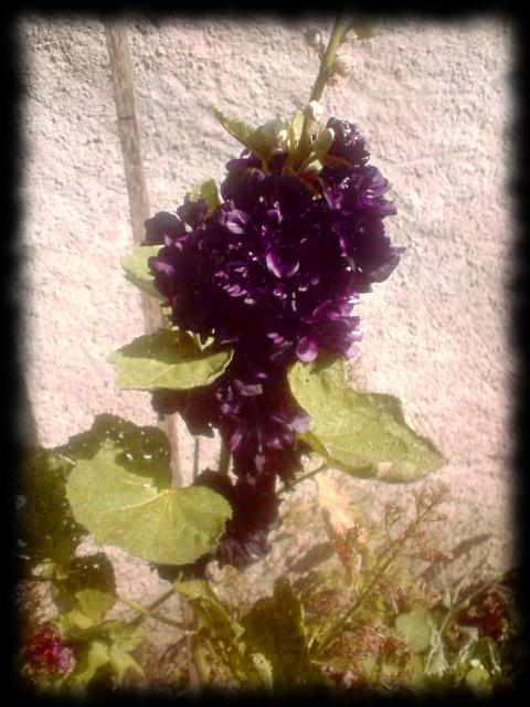 flower__divinity___by_ninaloo-d6em733