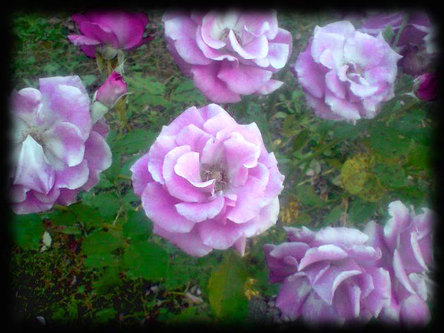 my_pink_garden_by_ninaloo-d6evvlq