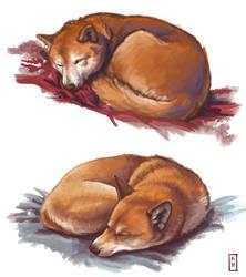 Shiba studies by Korpinarhi