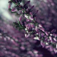 Autumn light by PiaG