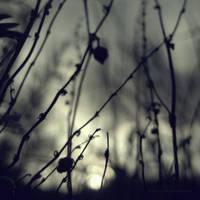 My Fairytale by PiaG