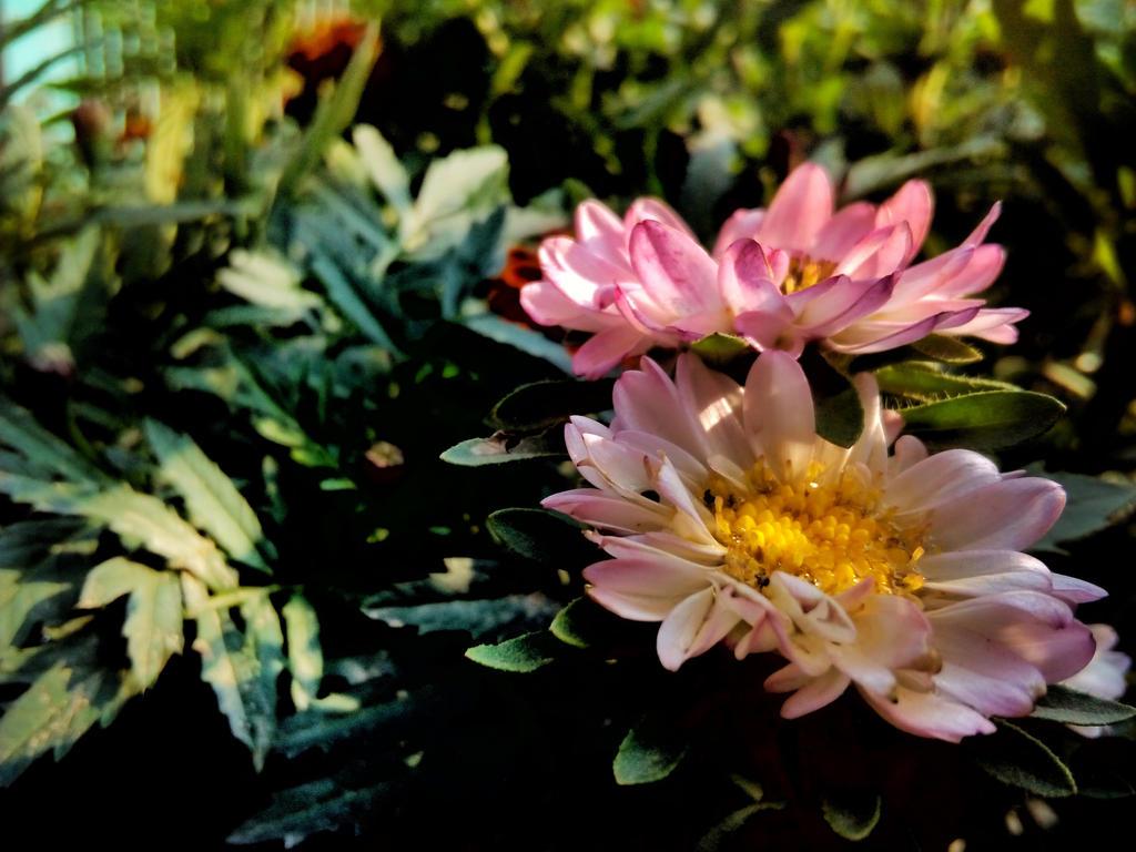 colourfull flowers by zaharaesha