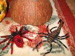 Spider and scorpion