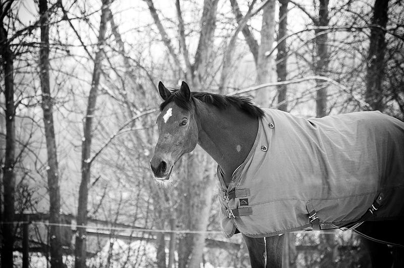 Horse by Lullsstar