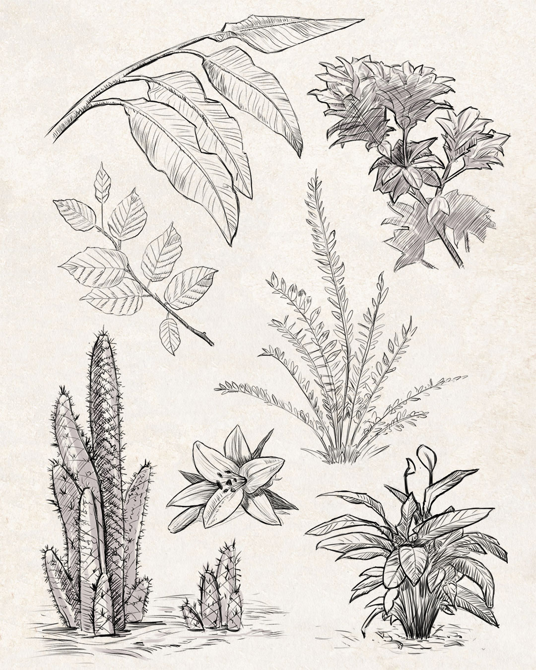 Sketches: Plants #1