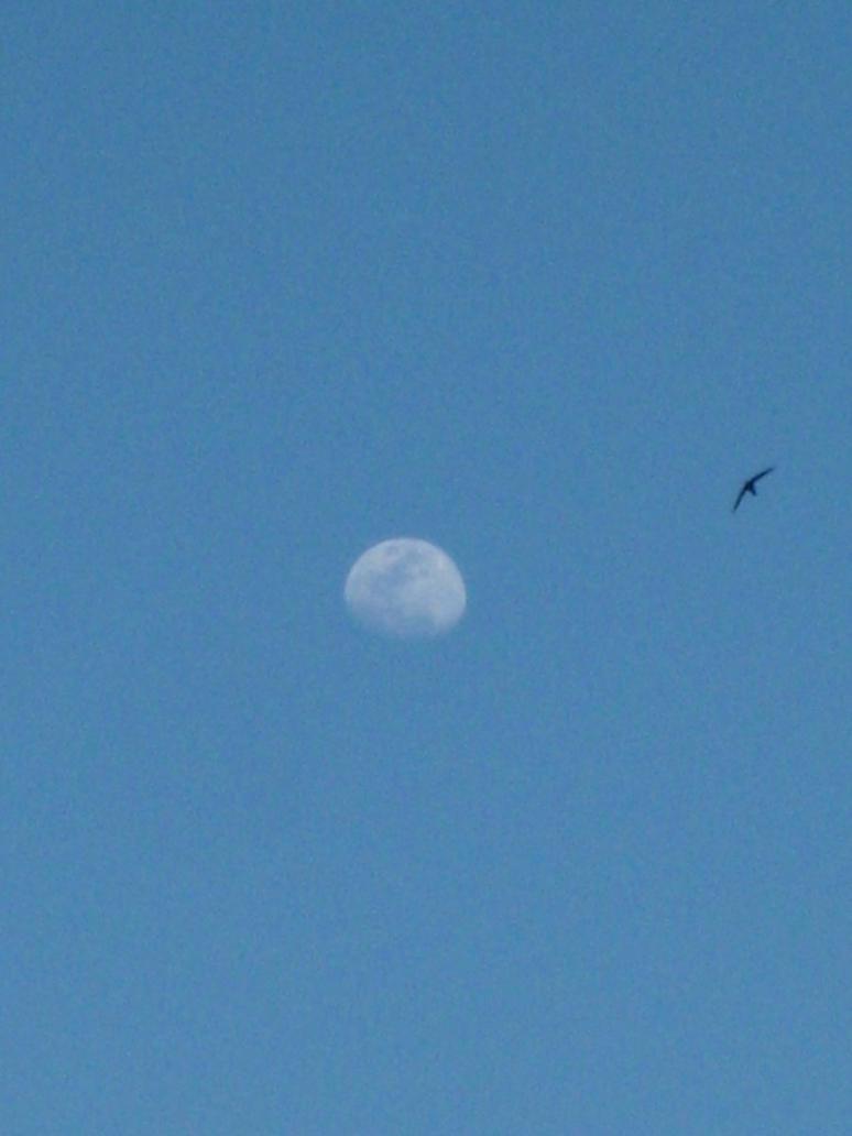 Happy Moon and Swallow by HappySpirit4