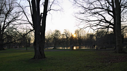 The old trees by the pond by phellmes