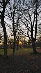 Behind the treeline by phellmes