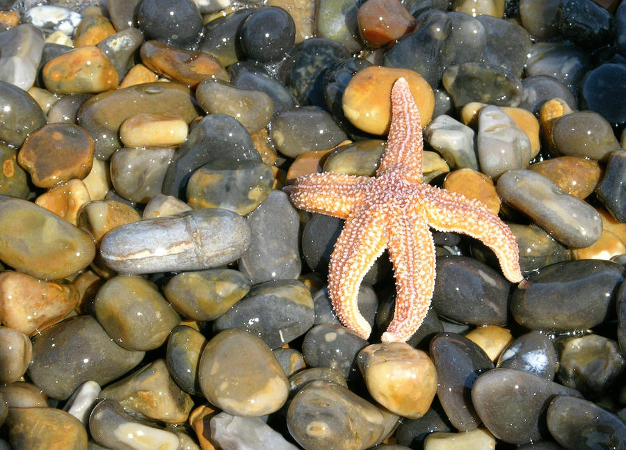 starfish by jynto