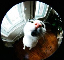Cat or Rat?? by dogeatdog5