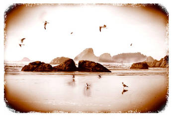 Not Quite a Flock of Seagulls by dogeatdog5