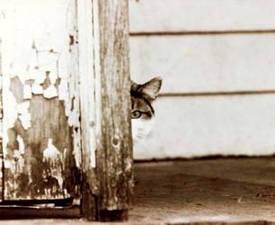 Peeping Eye Cat by dogeatdog5