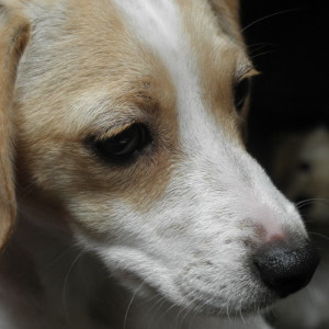 DornCresh's Profile Picture