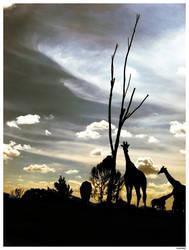 Safari by levhita