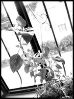 a simple plant studio by levhita
