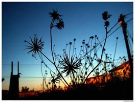 Falling Sun by levhita