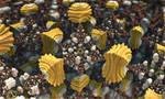 Computational Bouquet