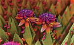 Fleurs Affectueux