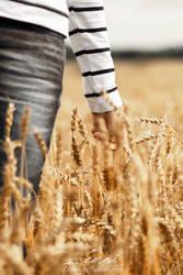Wheatfield by Zemni