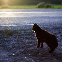 Black Cat Crossing by Zemni
