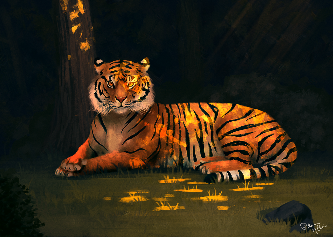 Tiger by Paloma-McClain