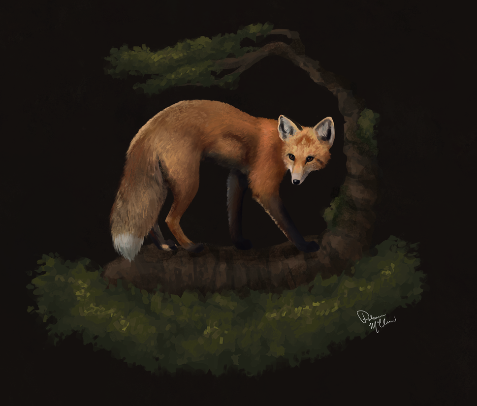 Fox by Paloma-McClain