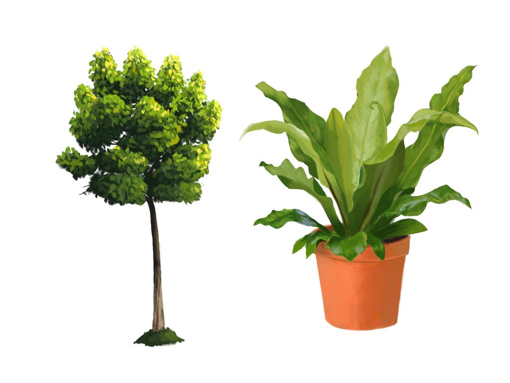 Plant Studies by Paloma-McClain