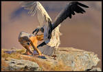 Jackal vs Vulture by mitchellkrog