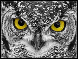Eagle Owl by mitchellkrog