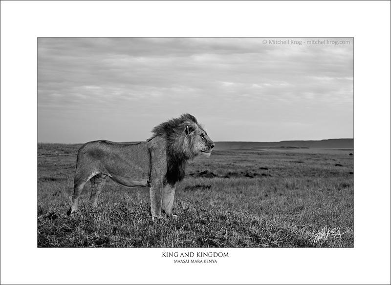King and Kingdom by mitchellkrog