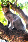 Cat on a green tree