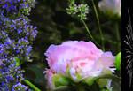 Garden raptures