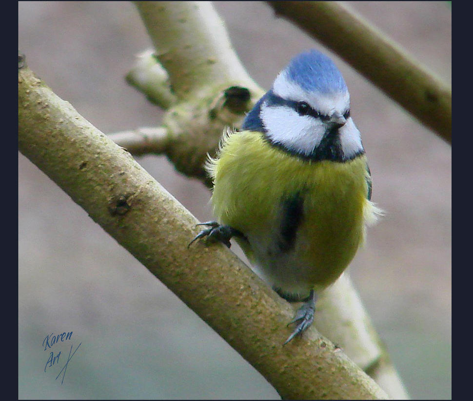 Outside my window by buble on deviantart for 2 little birds sat on my window