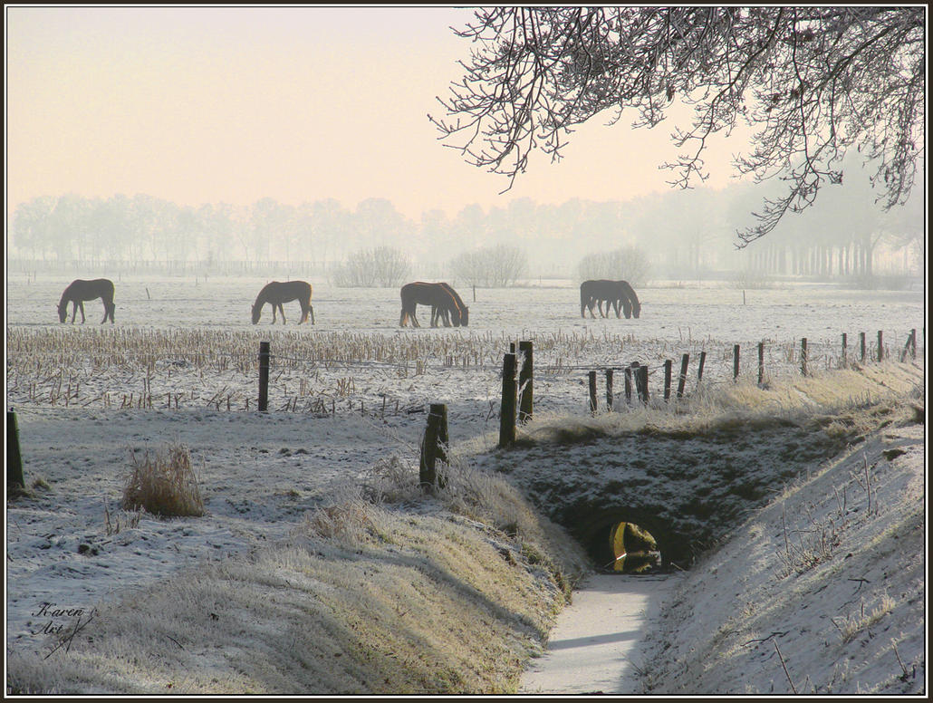 Grazing in winter by Buble