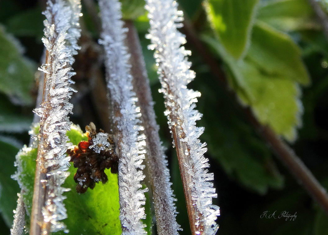 Winter frost by Buble