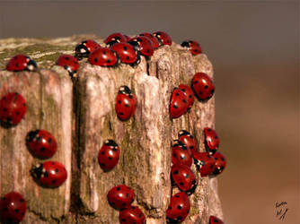 Lady birds by Buble