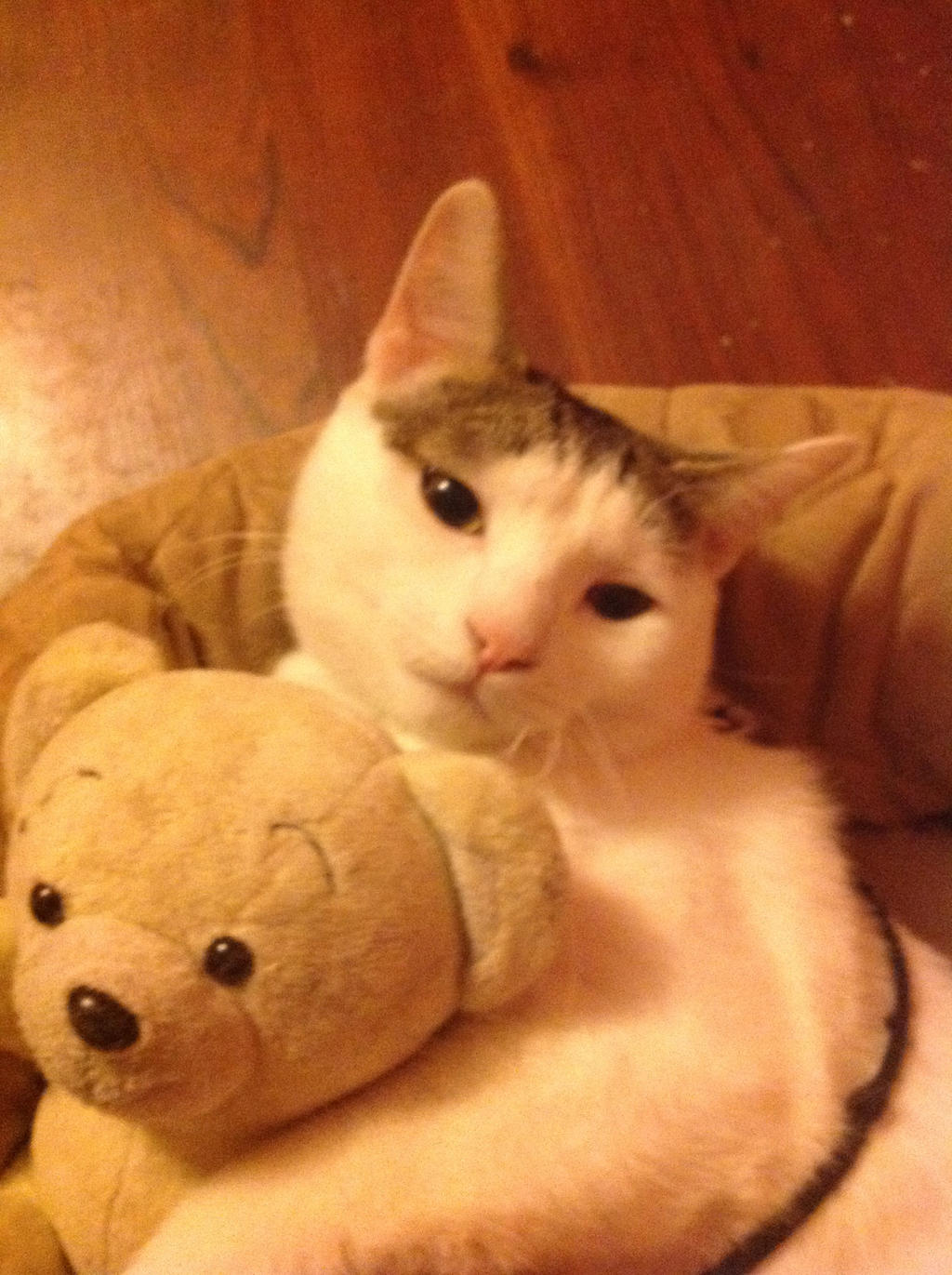 Alicia Smiles i gave teddy to my smiles's cat. 8.alicia-anne3443 on