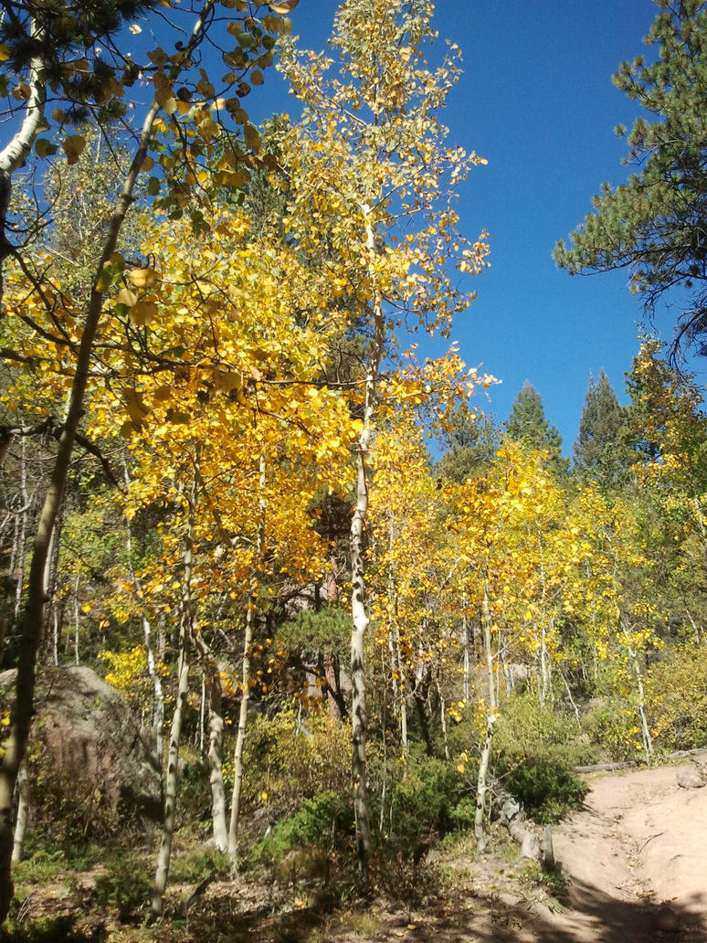 Aspens on Mount Herman by Tyrannosaur17