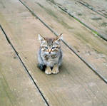 a kitty on the pier