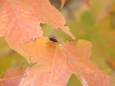 Bugging out in Fall by CU-rob