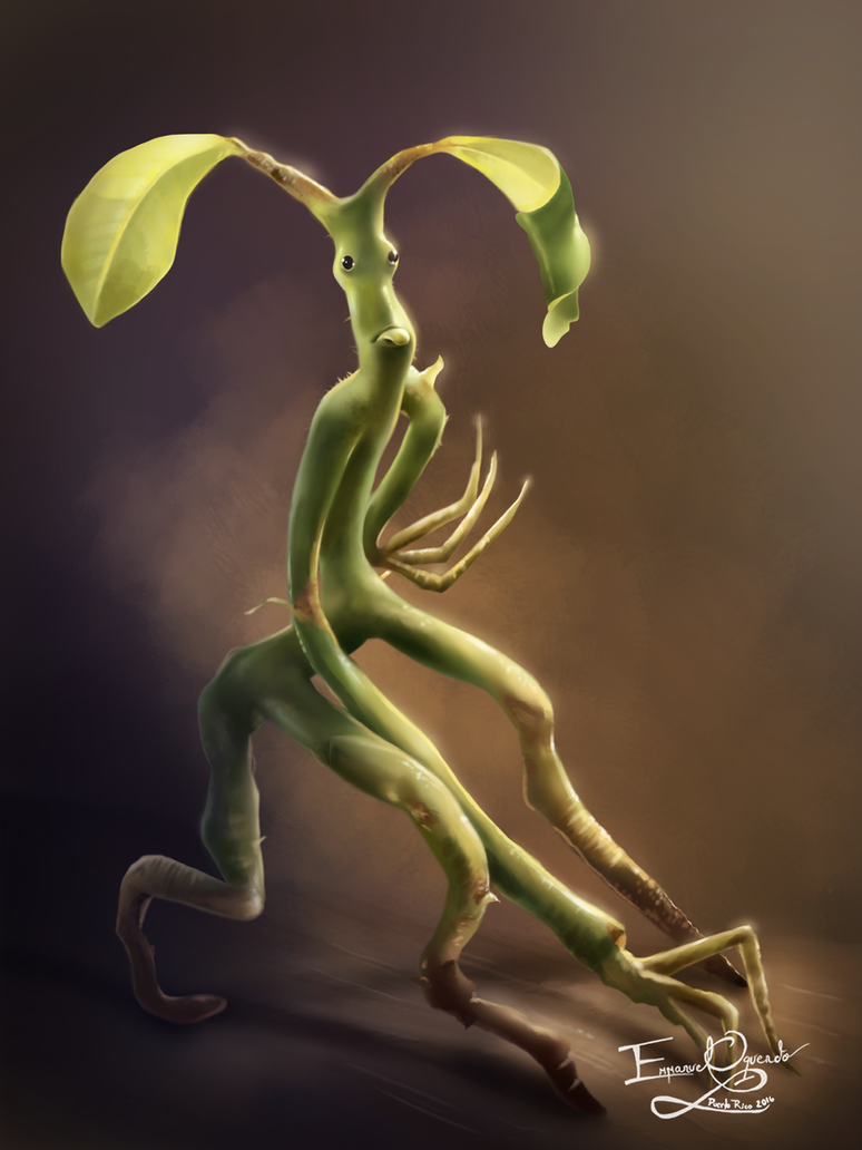 PICKETT THE BOWTRUCKLE 647868554 on flat preview