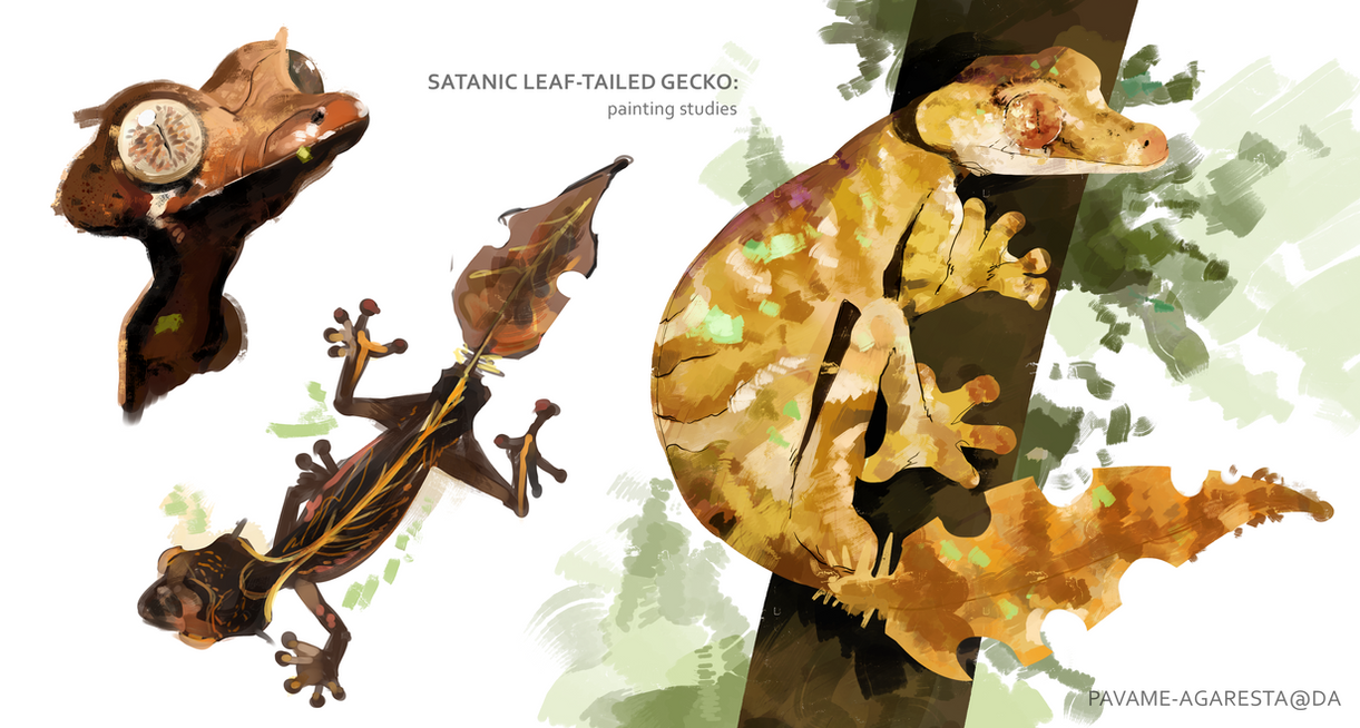 [ Painting studies ] : satanic leaf-tailed gecko by pavame-agarestia