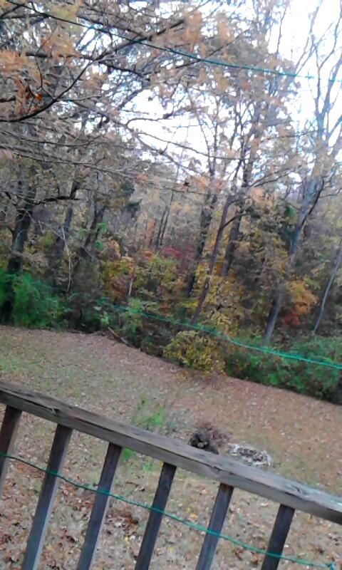 Fall yard by kaceymears