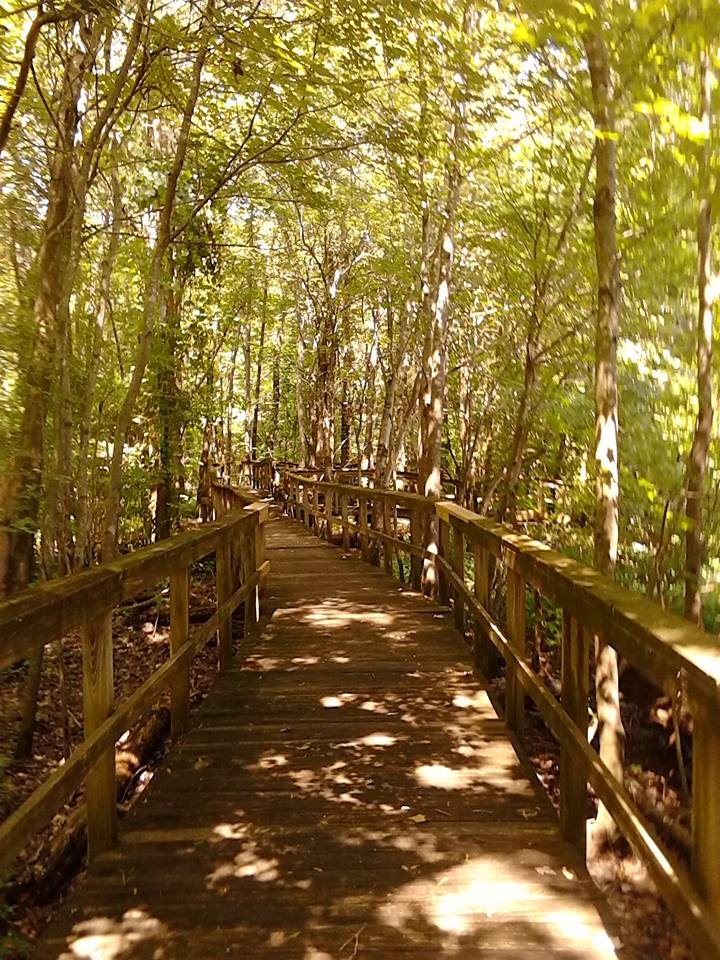 Cypress Grove board walk by kaceymears