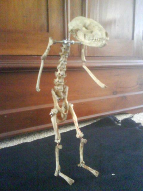 bone doll by rusty-skye