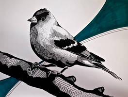 Oiseau trame