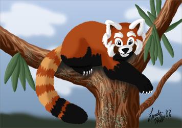 Red Panda by sailorharmony2000