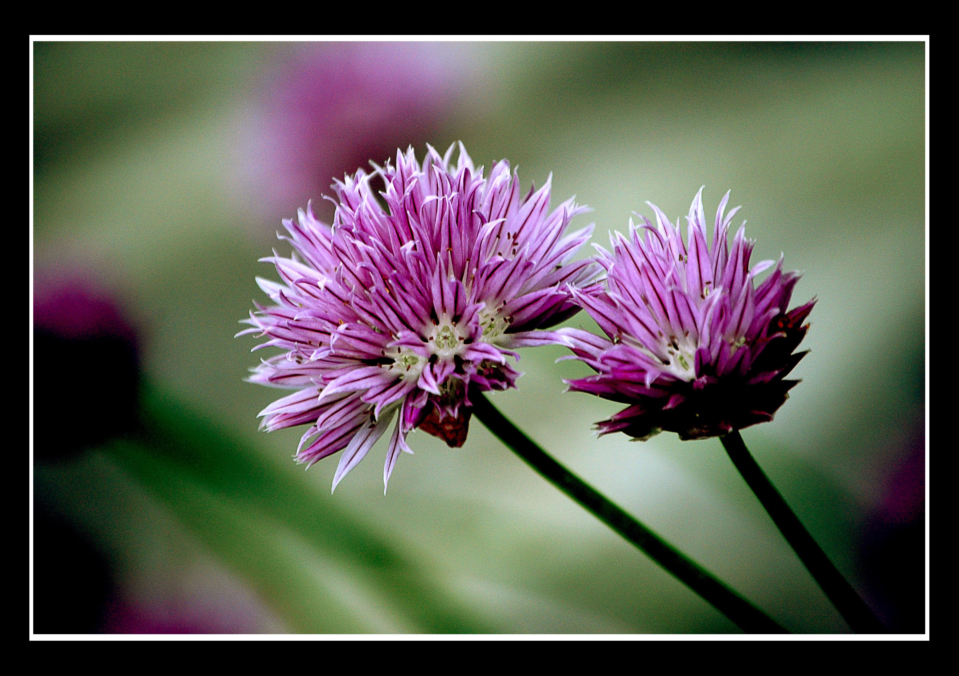 Flowers by liela88