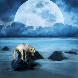 Twilight by MisgivingsX