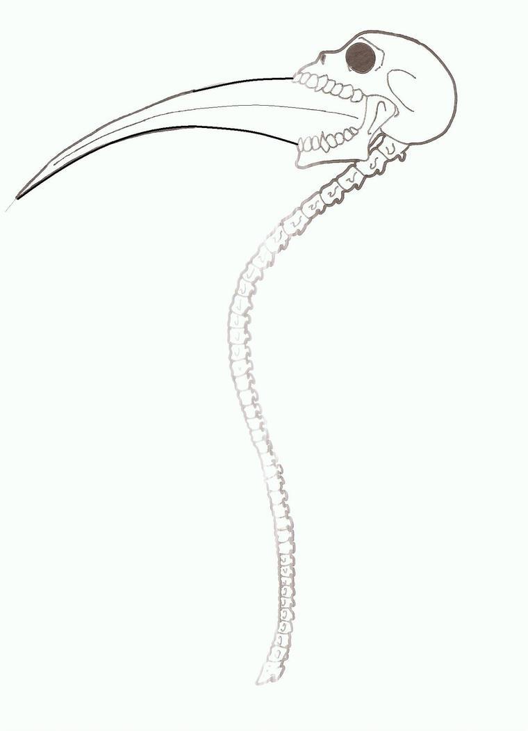 She...the hibrid. Death_weapon__death_scythe_by_akumakurohasu-d3a3b15